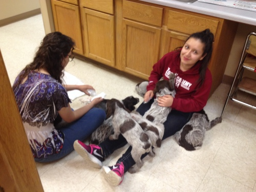 Omaha Public Schools Zoo Academy students from Omaha South High School assisted with the pups.