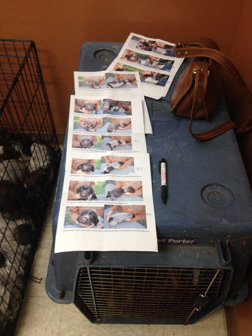 My copies of the puppy photos and owners