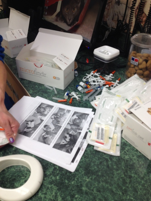 The vet tech's copy of the puppy photos and owners, with the mountain of microchip injectors.