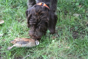 Chief wasn't sure about the quail at first