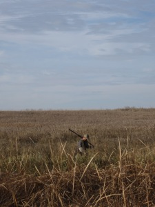 Somewhere down in those cattails is Chief giving up his first wild rooster retrieve.