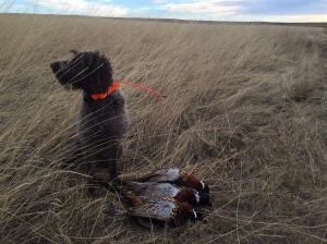 Harry and last fall's pheasants