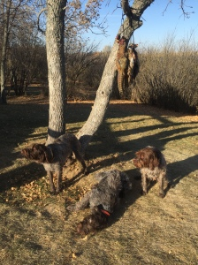 Fire, Chief, and BB with the pheasant limit and duck back at camp.