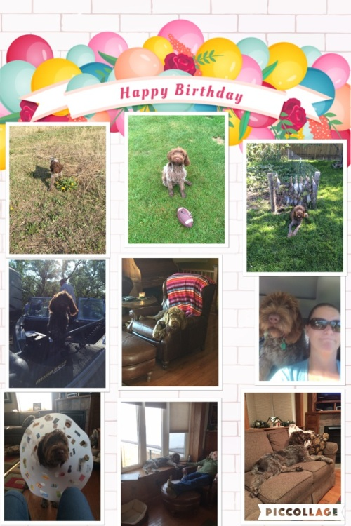 Cooper's first birthday