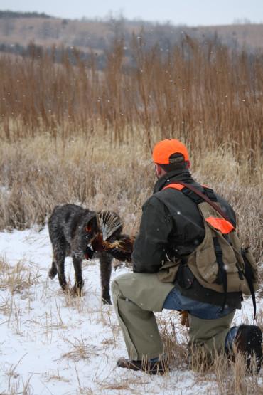 Sam pheasant retrieve 2010