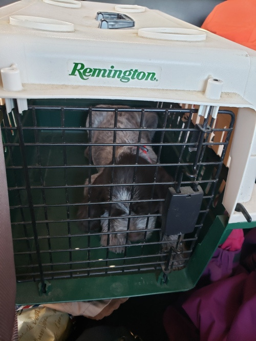 Bluestem Kennels Obi in crate