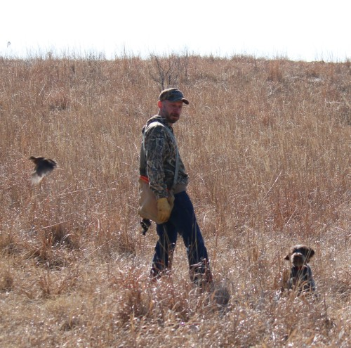First Flush - Hunting Wirehaired Pointing Griffon (2)