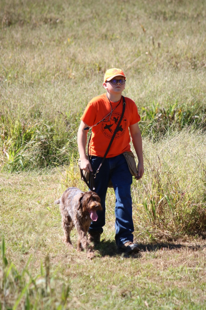 NAVHDA Natural Ability Wirehaired Pointing Griffon